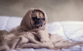 Consejos para proteger a tu perro durante la época de lluvia