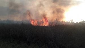 Tras incendio, descartan daños a fauna silvestre y manglares del estero El Salado