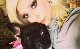 Lady Gaga: el violento robo de dos perros de la cantante en Los Ángeles (y por qué no es un hecho aislado)